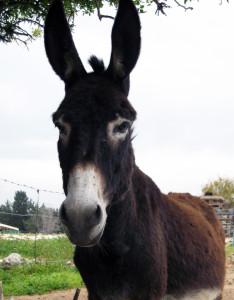 AD Donkey