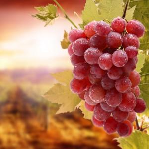 Виноградник на Кипре
