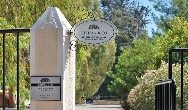 In vino veritas: Ktima KEO, или Наше знакомство с традициями