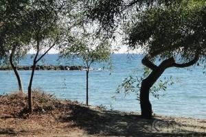 Dasoudi Beach - Limassol