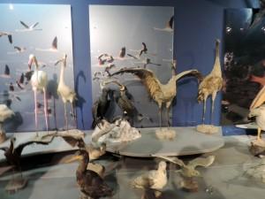 Морской музей Thalassa