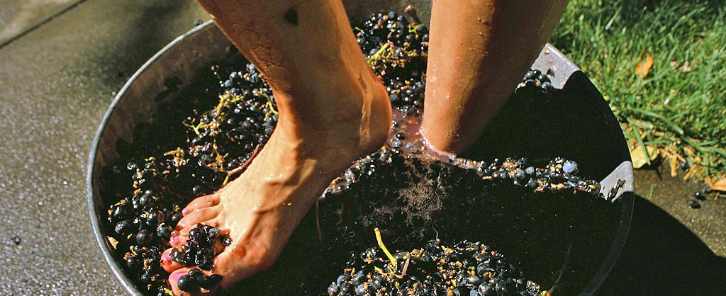 Виноградное приключение