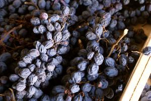 Dry grape