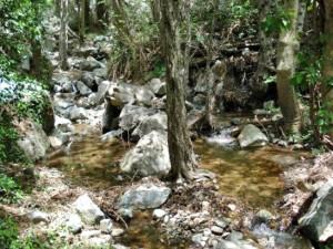 Река Педиеос