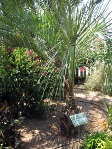 Мармеладная пальма