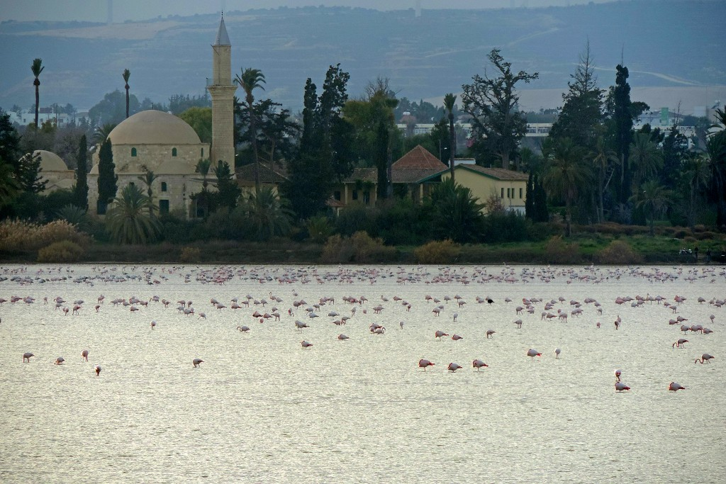 larnaca Salt Lake & Flamingo