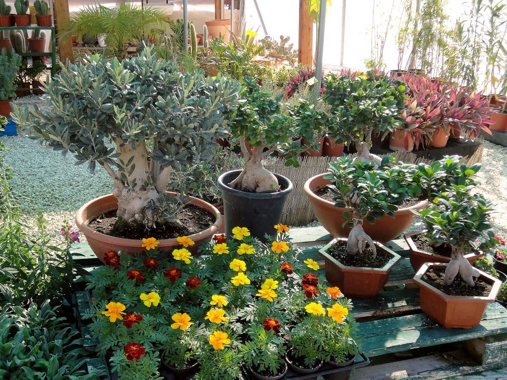 I.K. Paradise Gardens