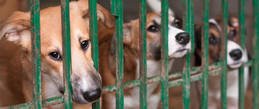 Собачки из приюта