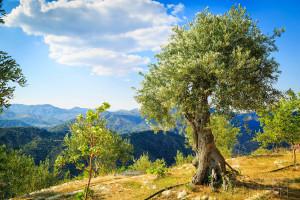 terra-oliva-olive-farm-cyprus-9