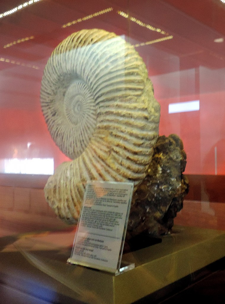 Municipal Sea Museum Thalassa