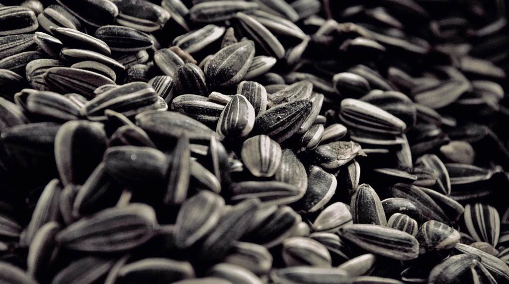льняное семя против паразитов в организме человека