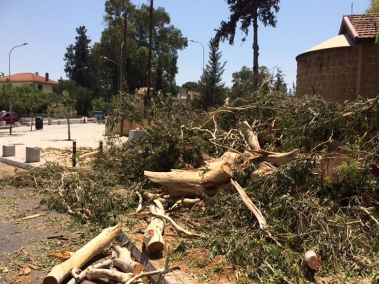 Вырубка деревьев на Кипре