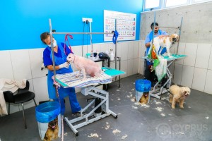 Dr. Savvas S. Alexandrou Vet Clinic