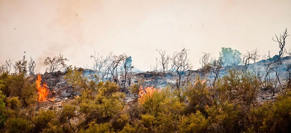 Пожары на Кипре