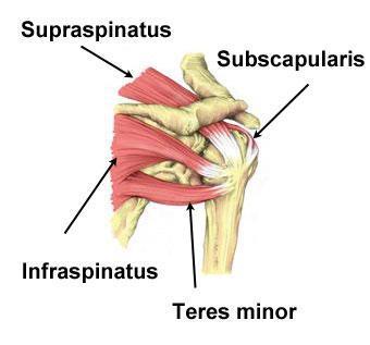 Расстройства вращательной манжеты плеча