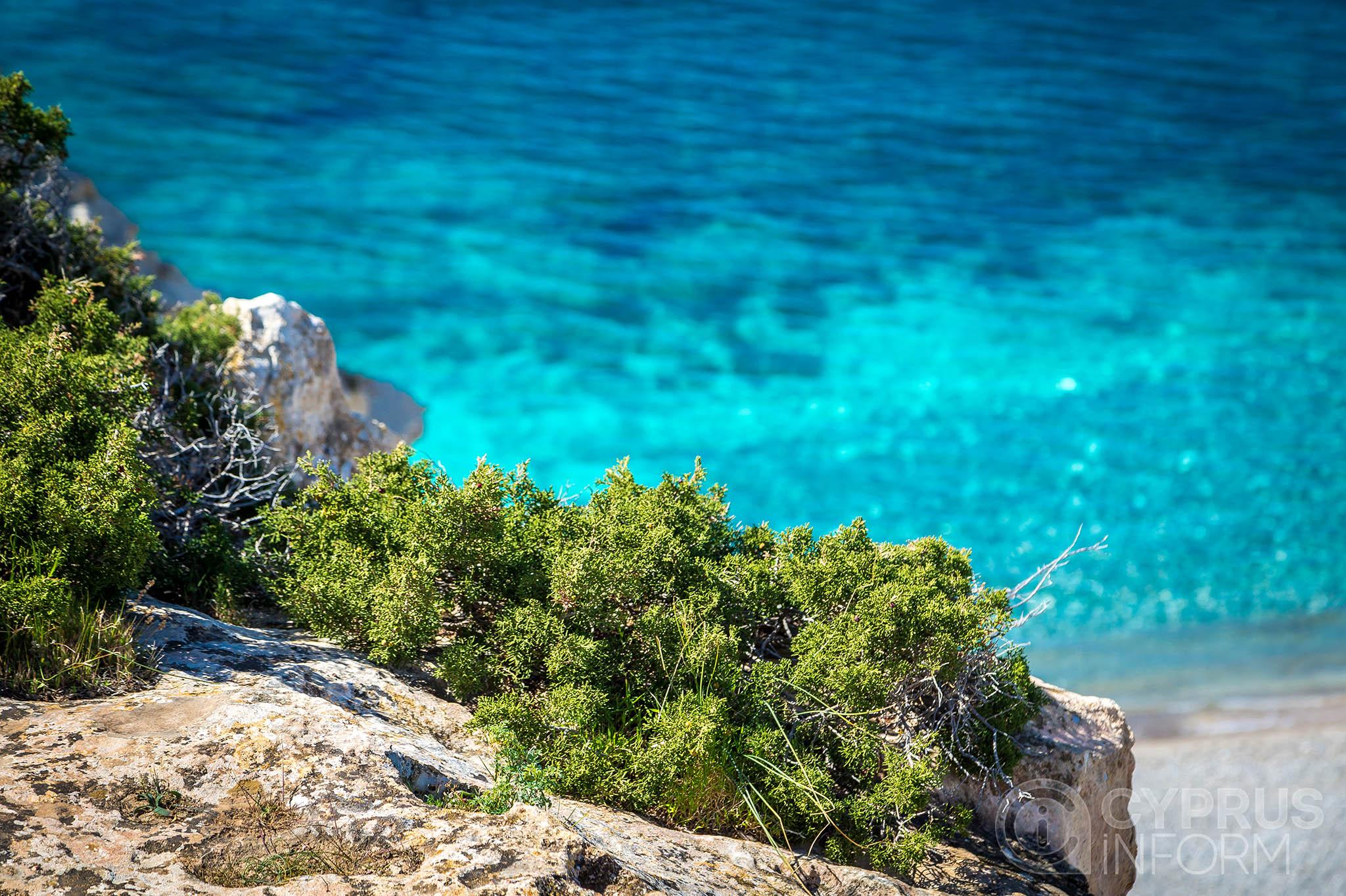 среда национальный лесной парк каво греко фото сайте можете бесплатно