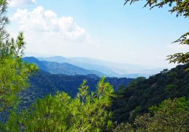Леса Кипра