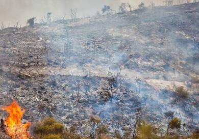 Пожар на Кипре
