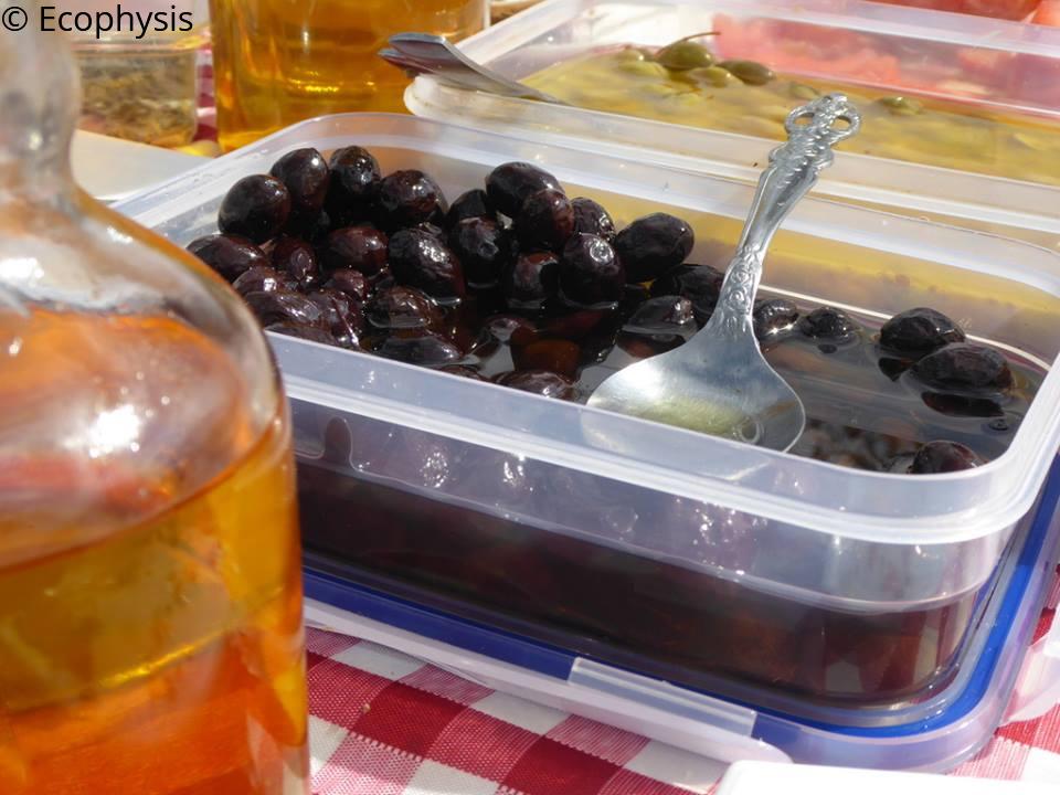 G.S Ecophysis - olives