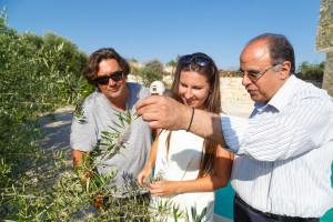 Terra Oliva - Olives Farm Cyprus