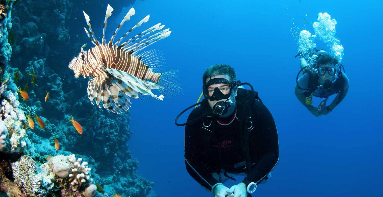 diving-fish-maldives