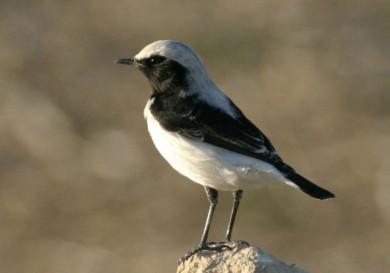 birdlife-cyprus-trips