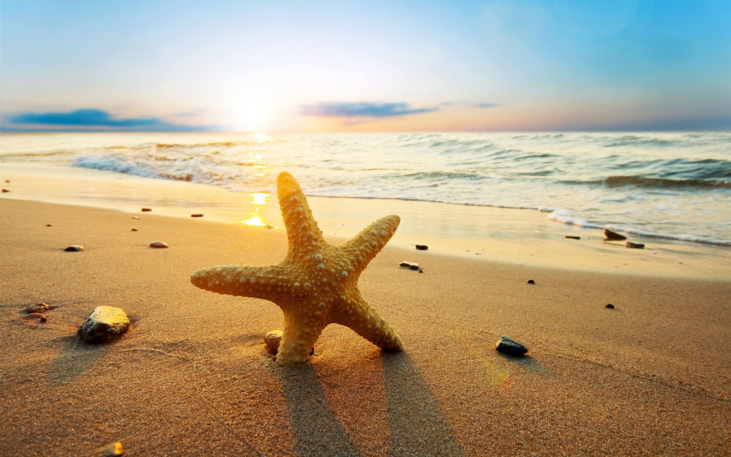 starfish-at-sunset-beach-sea-sun-2k-wallpaper