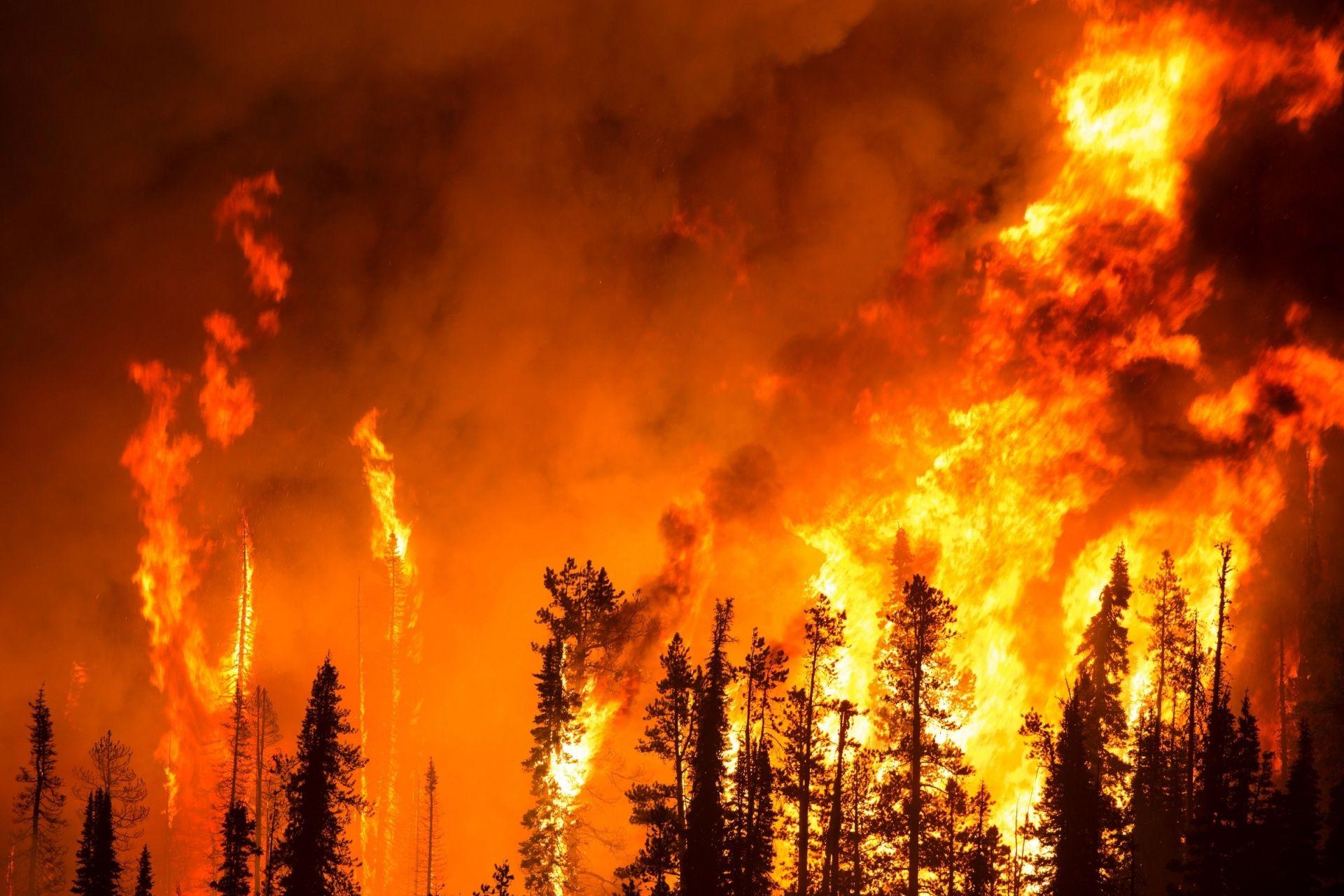 Лесной пожар Бесплатная фотография - Public Domain Pictures