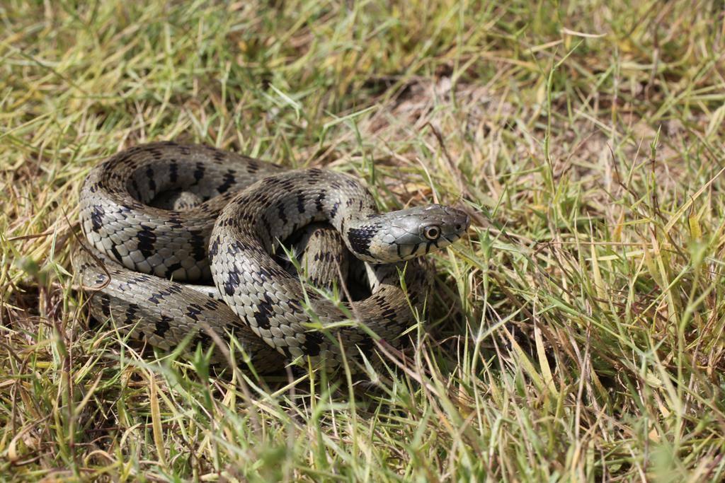 после первой змеи кипра фото здоровья, веселья смеха